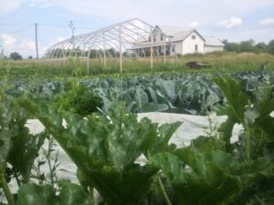 The Field, Proto-Greenhouse, and Farmhouse